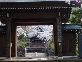 最勝禅院 桜